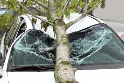 Baum auf Auto